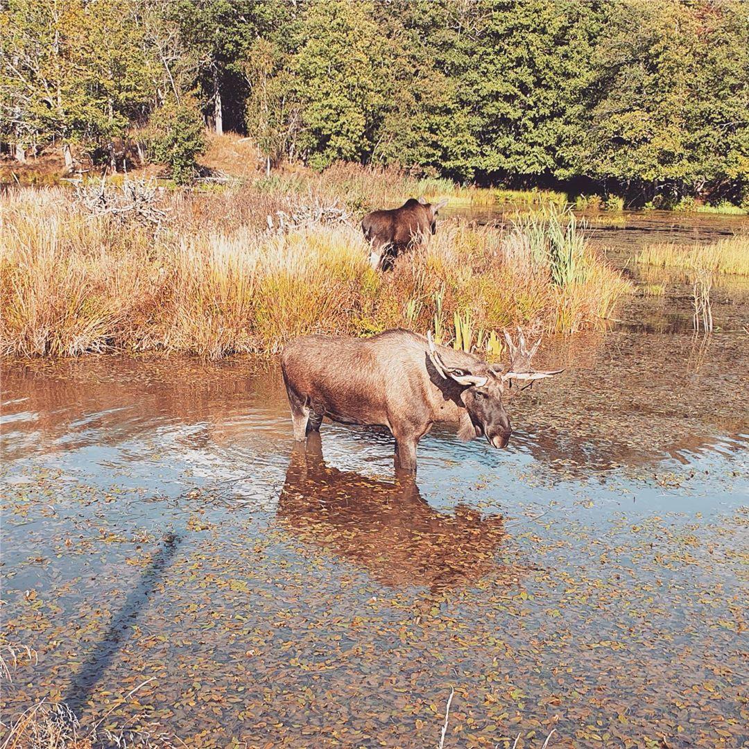 Höstlovskul på Öster Malma! Gå till vår hemsida för mer info www.ostermalma.se #wildlifepark #vilt #höstlov